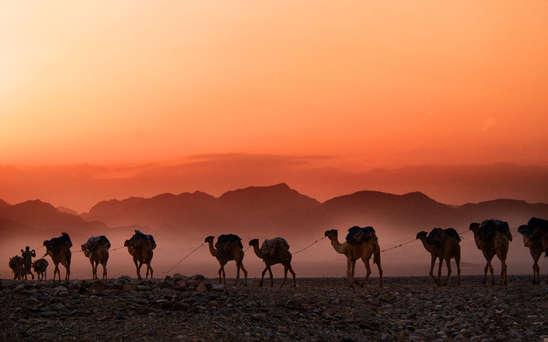 Prophet Muhammad's hijrah from Makkah to Madinah on camels.